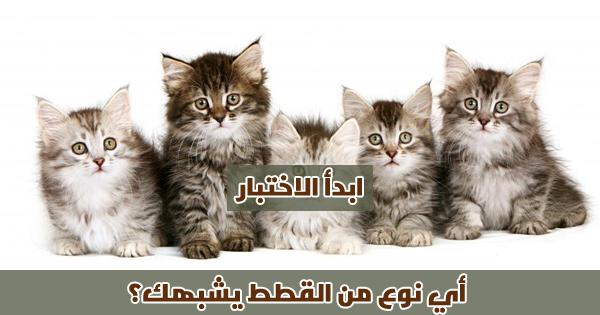 أي نوع من القطط يشبهك ؟