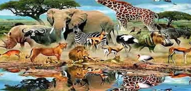 ما هو أكبر الحيوانات؟