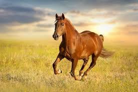 ماذا يطلق على صوت الحصان ؟