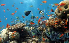 تعتمد شفافية أو درجة لون البحر على :