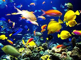 أخطر وأشرس الأسماك في العالم هي :