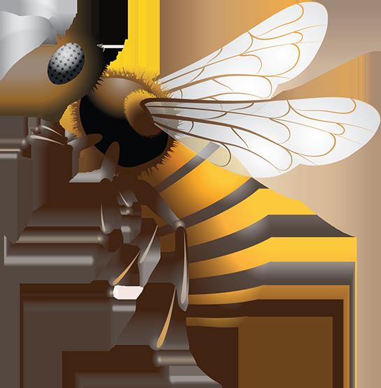 كم معدة لدى النحل؟