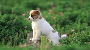 ما اسم صغير الكلب ؟