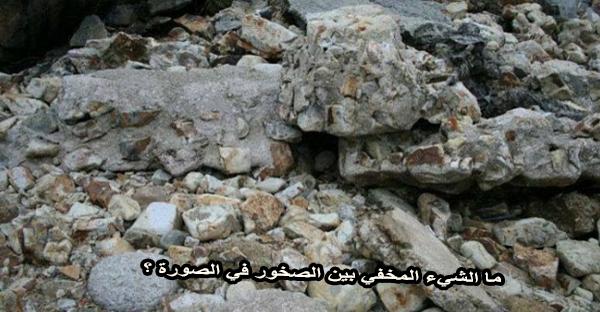 ما الشيء المخفي بين الصخور في الصورة ؟