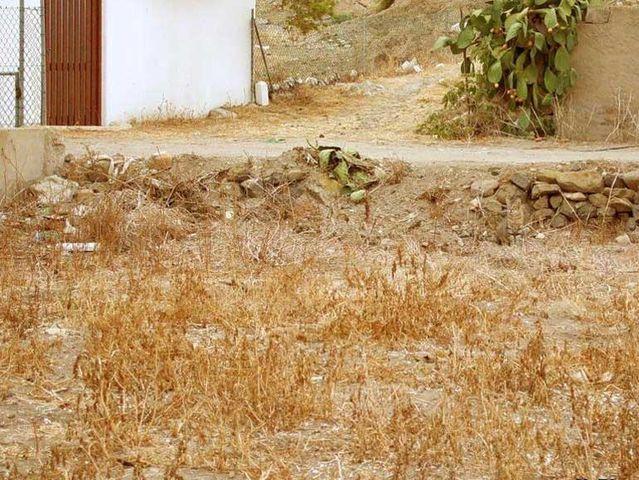 الحيوان الذي يختبئ في الصورة؟