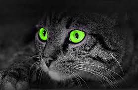 تتفوق رؤية القطط في الظلام عن الانسان بمقدار .....